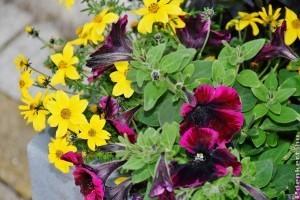 Dézsakert az erkélyen: milyen konténert és milyen növényt válasszunk?