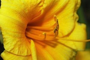 Virágok lencsevégen