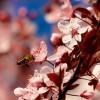 Hogyan tegyük a kertünket méhbaráttá?
