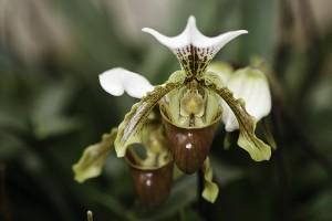 Beszélgess az orchideáiddal!