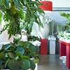 Zöld oázis: virágboltból lakberendezési áruház