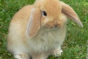 Állatok Húsvétja: élő helyett inkább csokit!