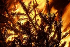 8 másodperc alatt lángra kap a karácsonyfa - nézd csak!