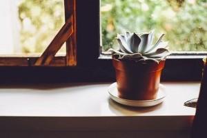 Betegek a növényeid? Bemutatjuk a helyes téli tartást!