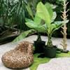 Városi Dzsungel - válasszunk személyiségünkhöz illő szobanövényeket!