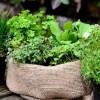 Hasznos tippek fűszernövények tavaszi vetéséhez