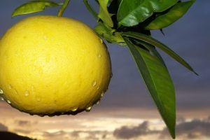 A grapefruit: segít a candida - fertőzésben szenvedőknek