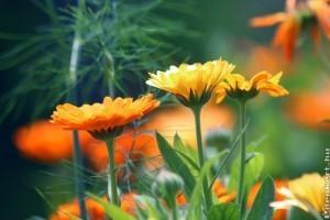 Hogyan gyűjtsük be kedvenc virágaink magjait?