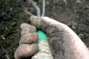 Hogyan hozzuk rendbe az elhanyagolt kertünket?