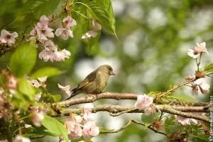 Meddig etessük a madarakat a kertünkben?
