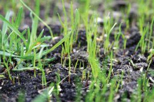 Mi a smaragdzöld gyep titka? - Scotts Díszpark műtrágyák és fűmagok a szebb környezetért