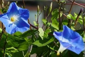 Futónövények magról: szépek és védenek a nyári forróságtól