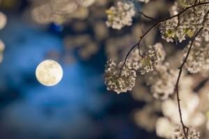 A Hold járása befolyásolja a növények fejlődését! Holdnaptár 2017 nyarára