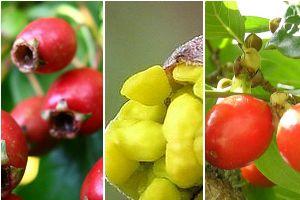 Különleges gyümölcstermők a kertünkből!