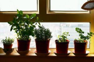 Fűszernövénykert az ablakpárkányon!