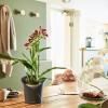 Hogyan kell öntözni az orchideát?