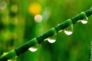 Növényvédelmi tanácsok az esőzések után!