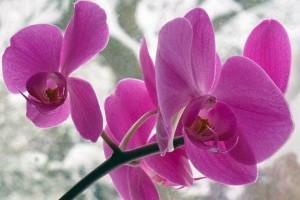 Téli növényápolás kulcsa a fény és a pára pótlása