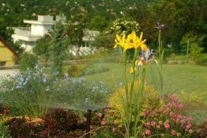 Hogyan varázsolhatjuk zöld oázissá a kertünket?