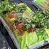 Hogyan termesszünk zsákos paradicsomot?