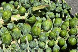 Mit kell tudni a kelbimbó termesztéséről?