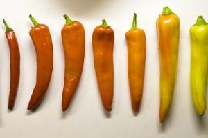 Hogyan termesszünk különleges zöldségeket?