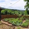 Tervezzük meg a saját kertünket! - 2. rész