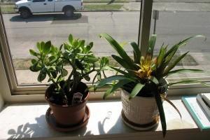 A szobanövények jótékony hatásai
