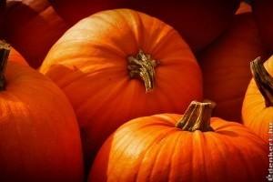 Mit tegyünk Halloween után a tökökkel?