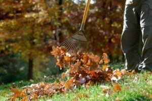 Késő őszi kertészeti teendők