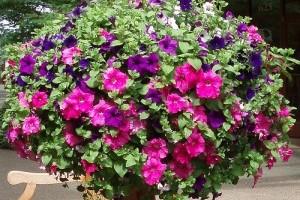Alakítsunk ki könnyen átrendezhető kerteket! - 4. rész