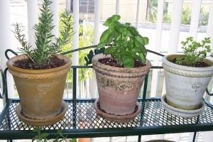 Beltéri zöldséges kert építése kezdőknek