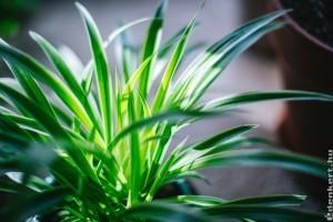Alacsony fényigényű szobanövények