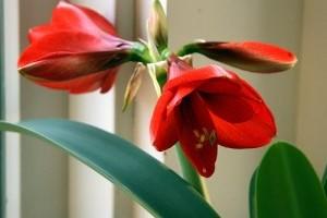 Dekoráció szobanövényekkel!