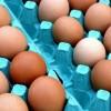 Jelöletlen tojásrakomány – mit szabad és mit nem