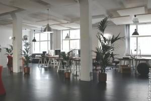 Az irodai növények 10 legjobbja