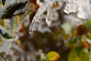 A legfontosabb januári kerti tennivalók