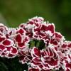 Virágok a mitológiában - Történetek, jelentések