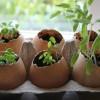 A tojáshéj újrahasznosítható így is