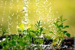 Túl vízes a talajunk? Készítsünk esőkertet!