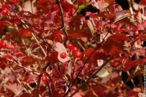 Őszi színek a kertben