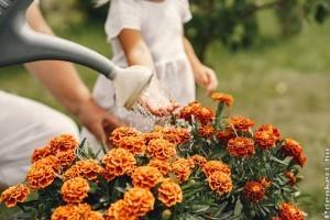 Augusztusi kerti munkák