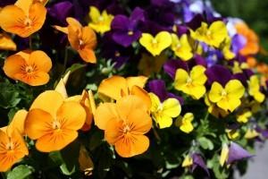 Virágzó Zugló 2011 - Hungária körút 33-41