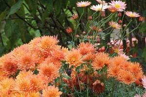 Virágzó Zugló 2011 - Füredi utca 5/b