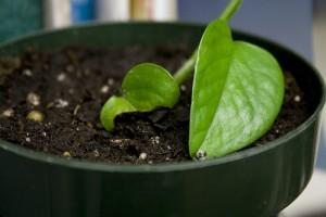 Ültetőközegek, talajkeverékek