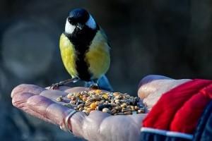 Kényeztessük télen a hasznos kerti állattársainkat