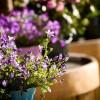 Mi a jelentősége a szobanövények nyugalmi időszakának?