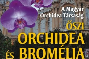 Orchidea és Bromélia Kiállítás és Vásár 2011