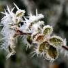 Dekoratív téli növényvédelem