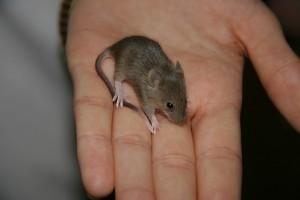 Így jártam az egerekkel